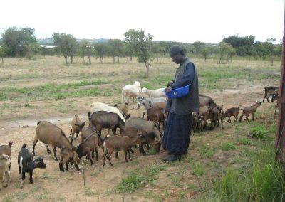Κτηνοτροφία στην Ι. Μονή Αγ. Αποστόλων του Κολουέζι