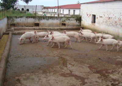 Φάρμα ζώων στο Κολουέζι
