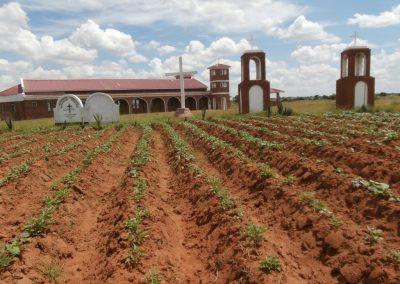 Κηπευτικά στο Γκούμπο του Μαλάουι